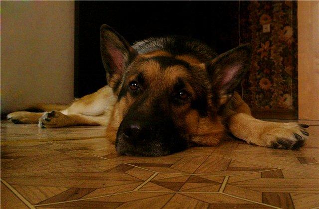 Печаль.... Блиц: собаки