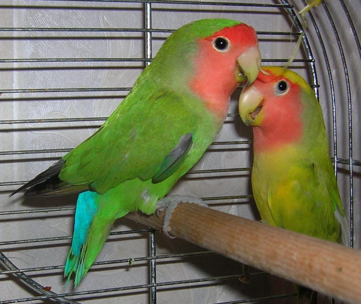 пока не позеленеешь- целоваться не будем:). Блиц: зеленое