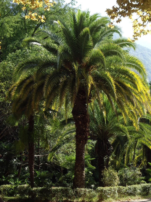 Пальма (на конкурс 'Блиц:зеленое').. Блиц: зеленое