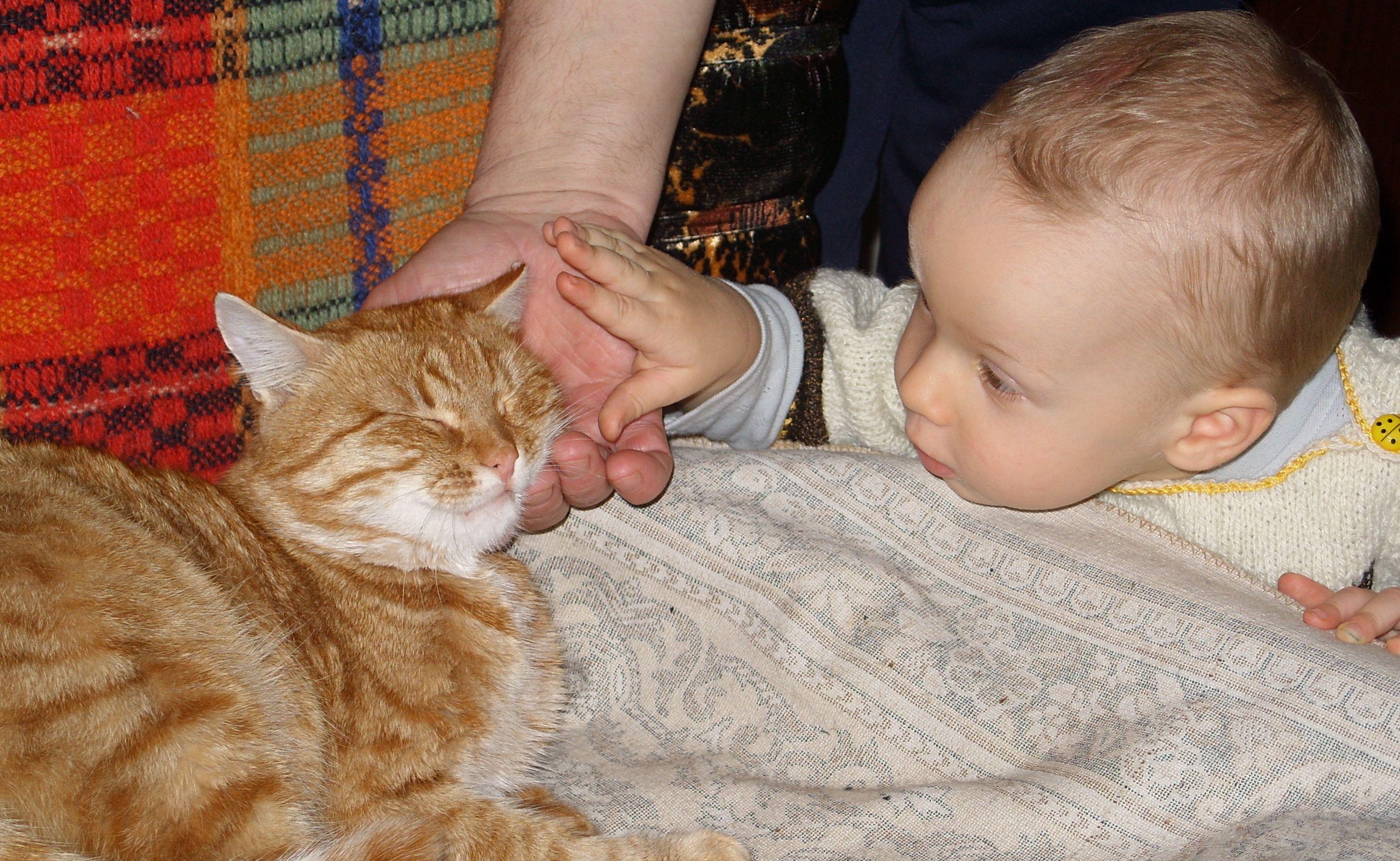 Ну посмотри на меня!. Кошки и дети