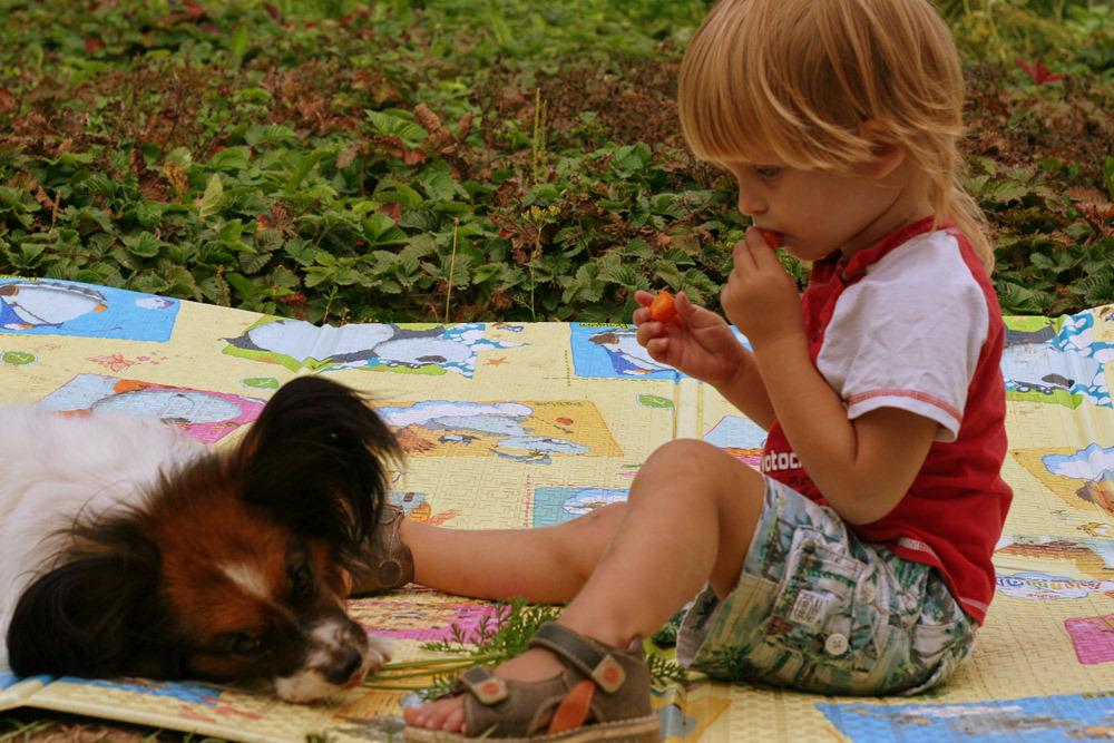 Любители морковки. Завтрак на траве