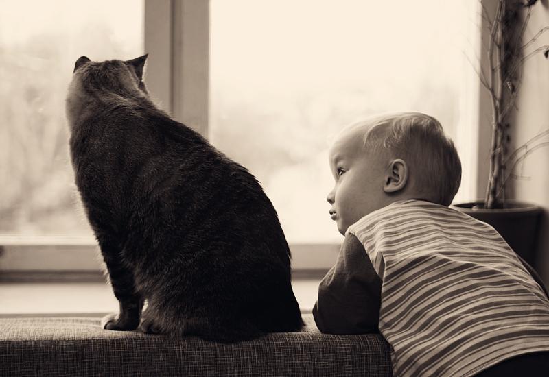 У окна. Кошки и дети