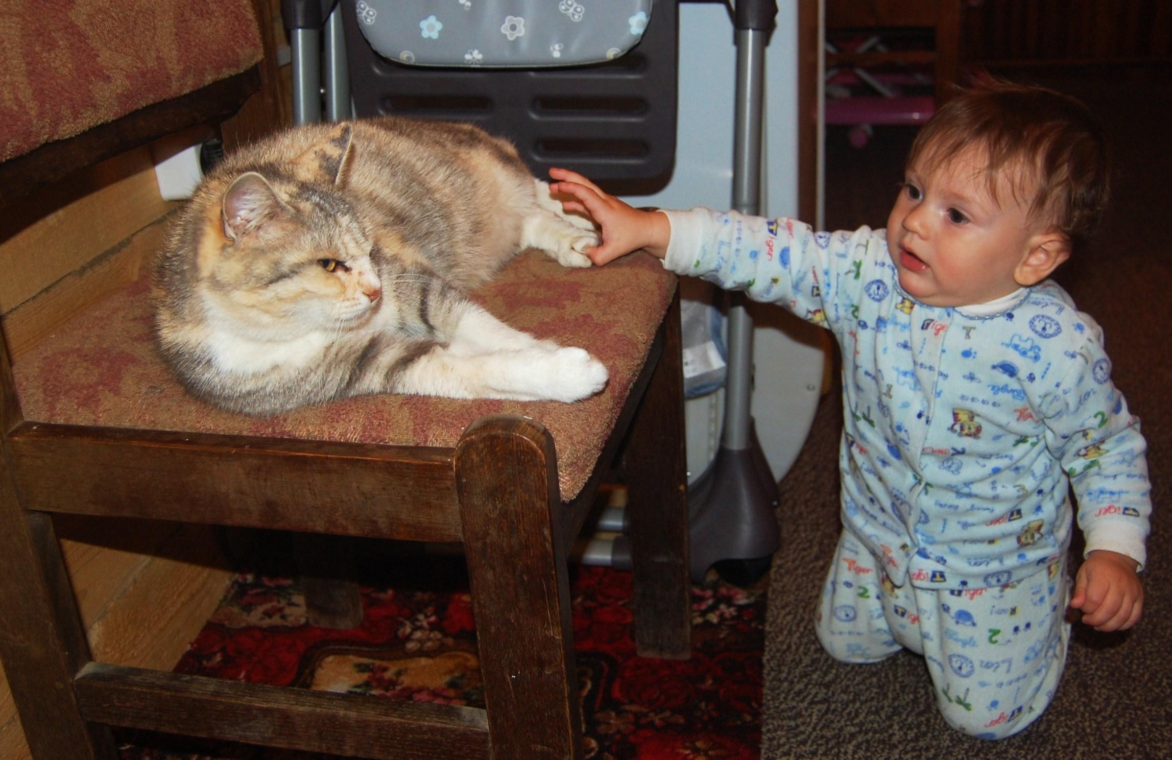Мои котята!. Кошки и дети