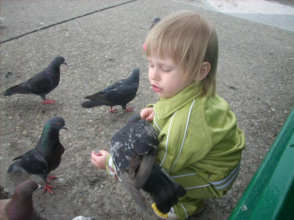 Беседы с птицами . Крылатые друзья