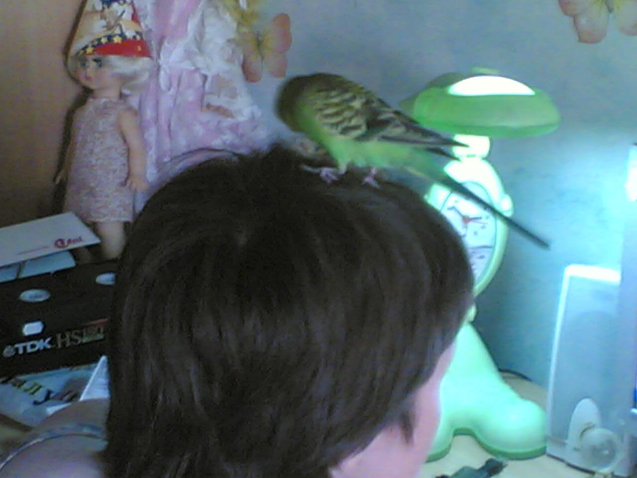 Кешка причесывает волосы. Крылатые друзья