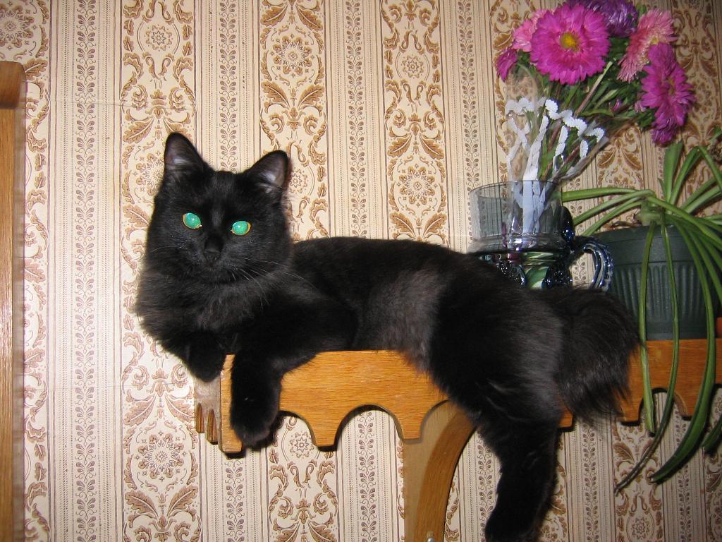 Кошка Ксюня. Кошки