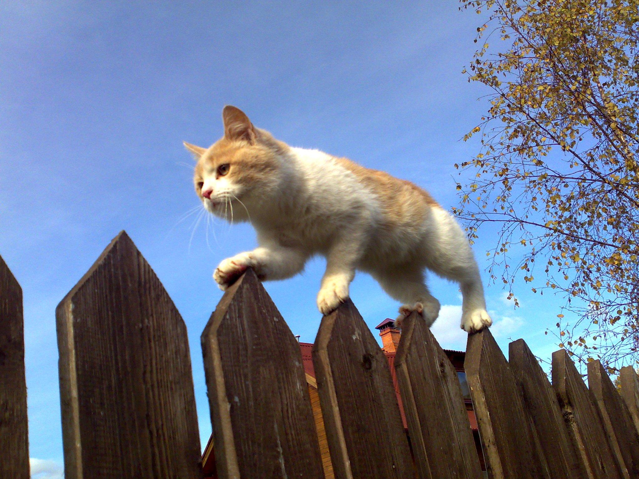 Кото-грелка! Кото-мурка и шипелка!. Блиц: с точки зрения кошки