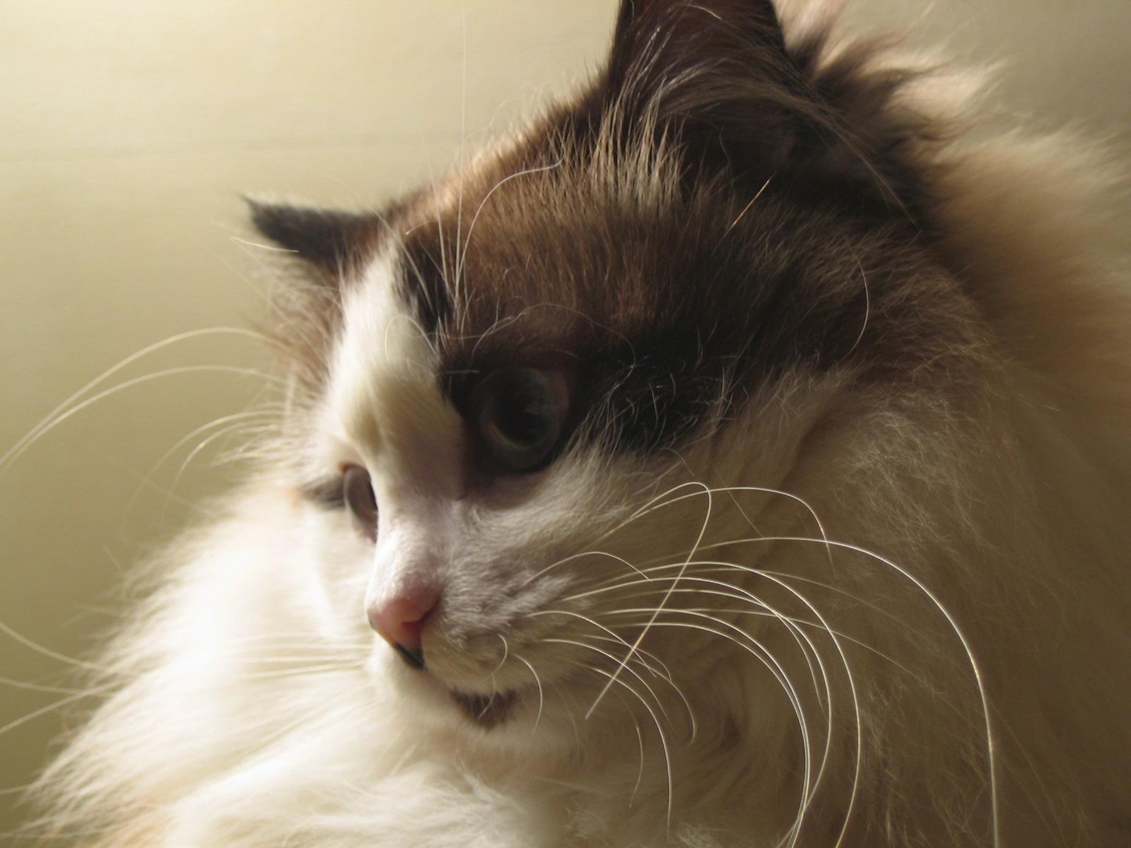 Кошка - это не только ценный мех....