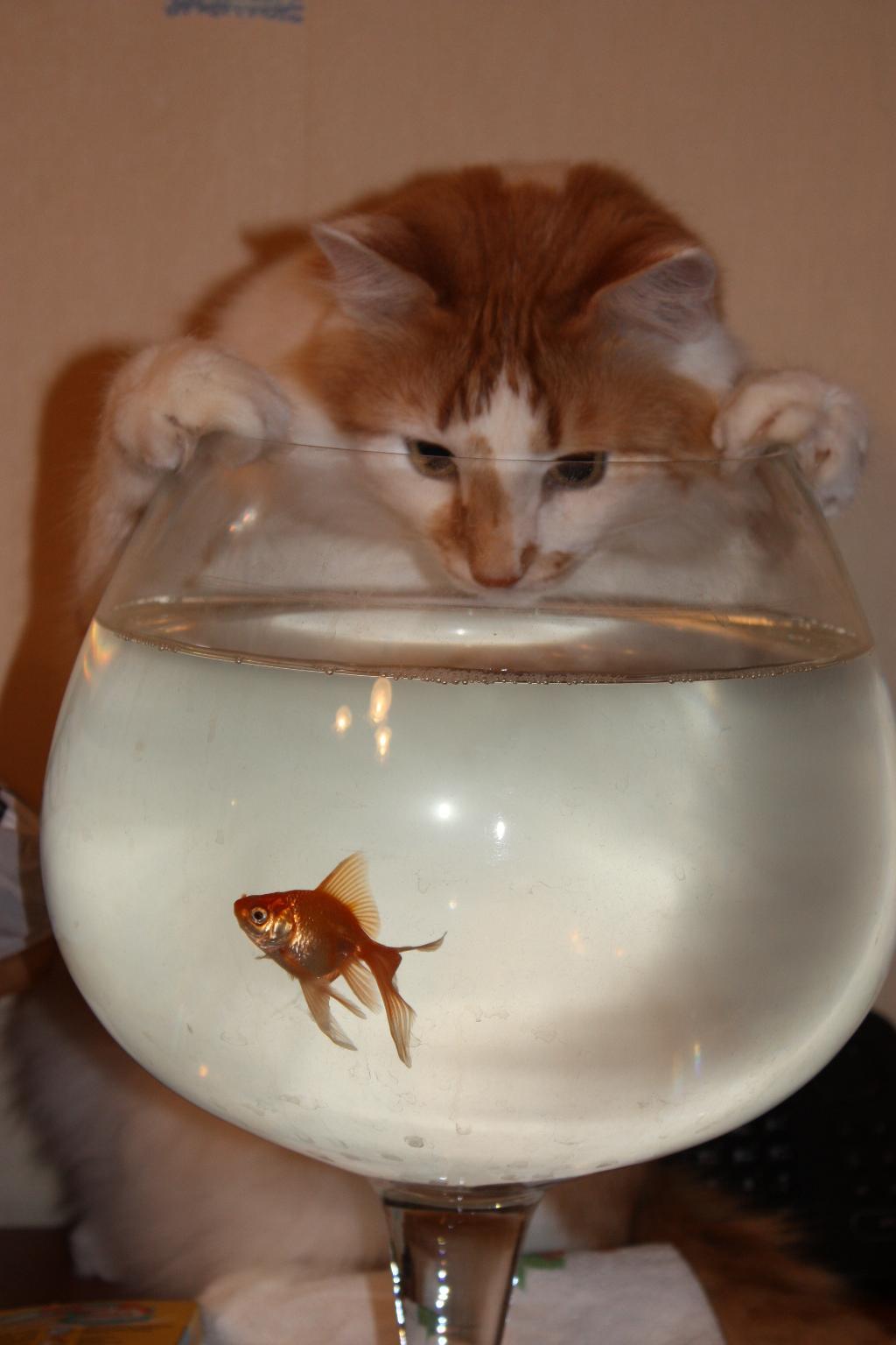 Здравствуй, друг!. Блиц: с точки зрения кошки