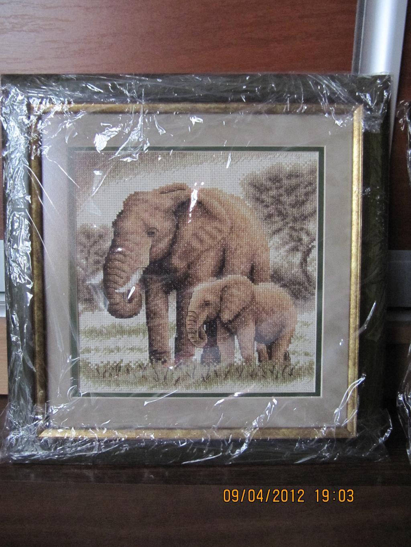 Слоны. Животные