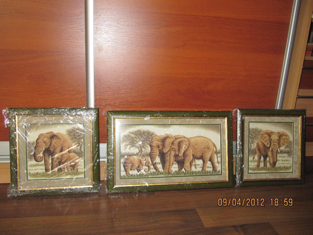 Семейство слонов. Животные