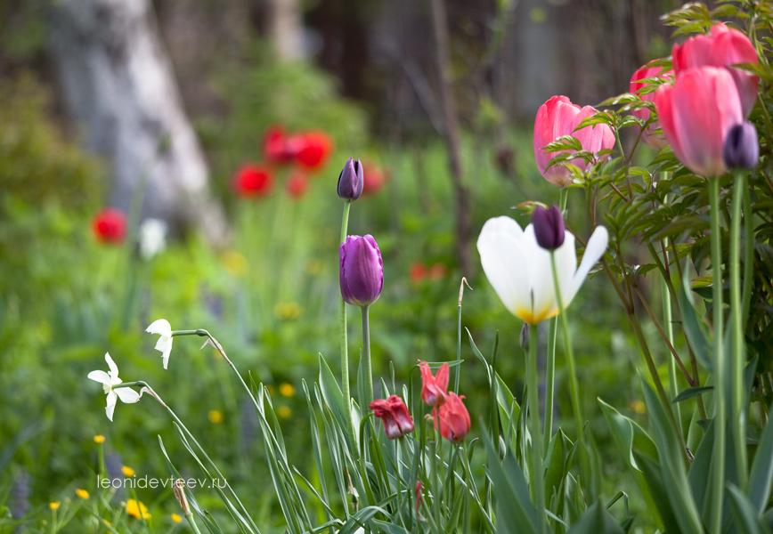Фото-открытка. Разноцветье. leonidevteev.ru. Весна. Май 2012