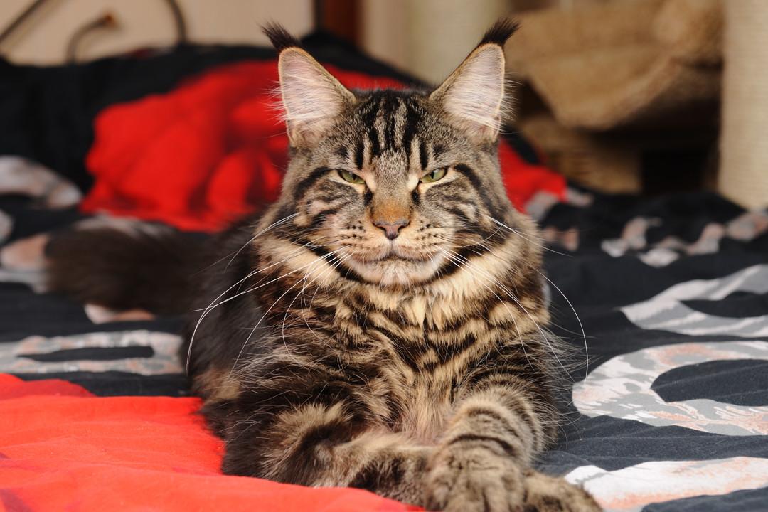 Царь...очень приятно:))). Блиц: с точки зрения кошки