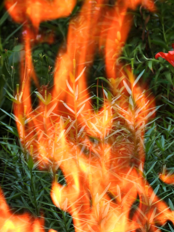 Берегите природу!. Блиц: огонь