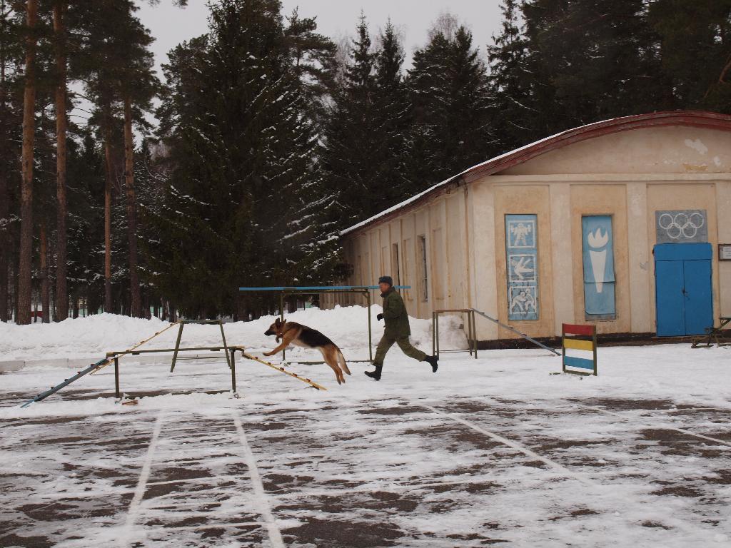 Питомник собак+ Т-34