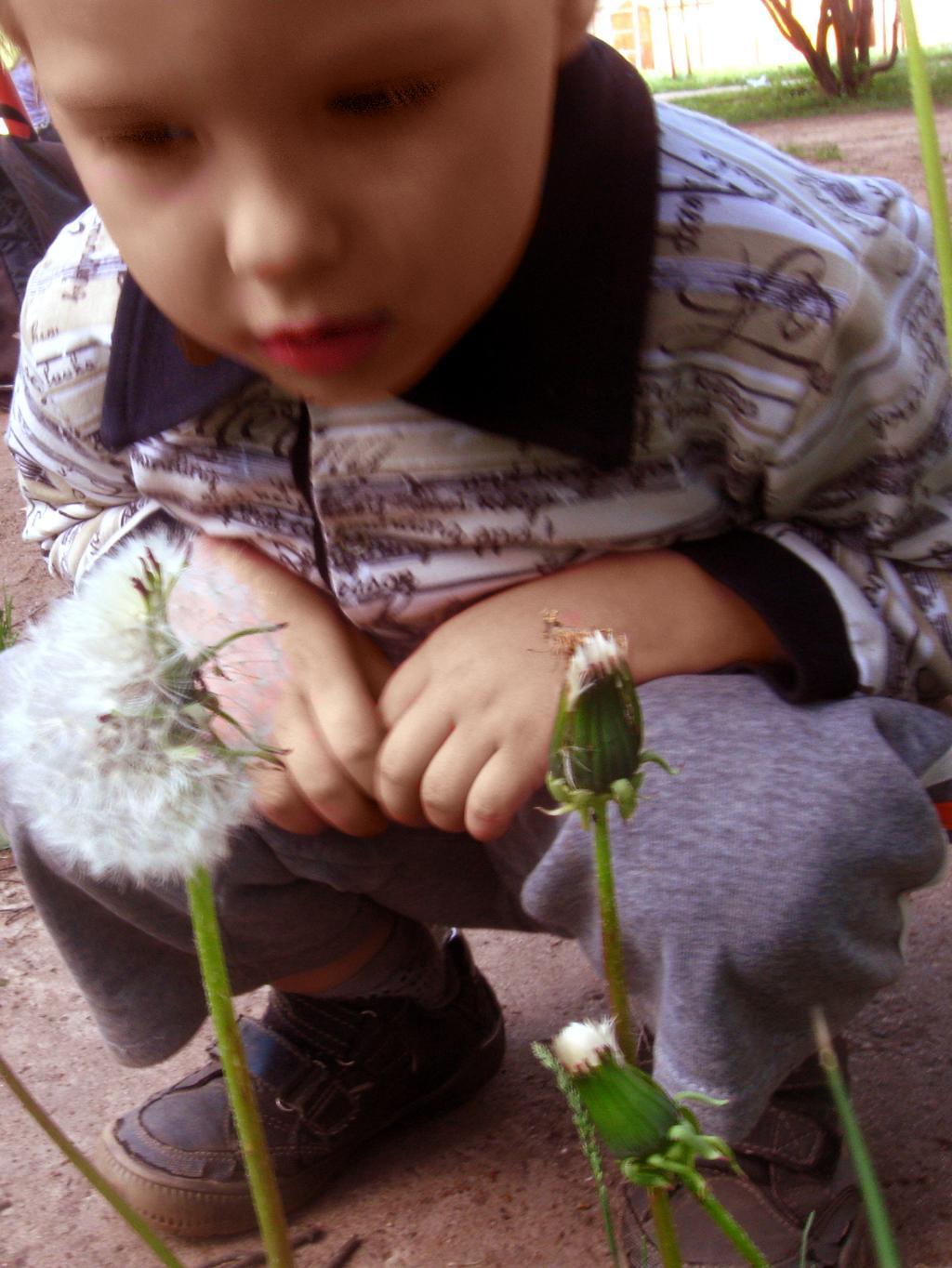 Мальчик-Одуванчик. Ценная находка