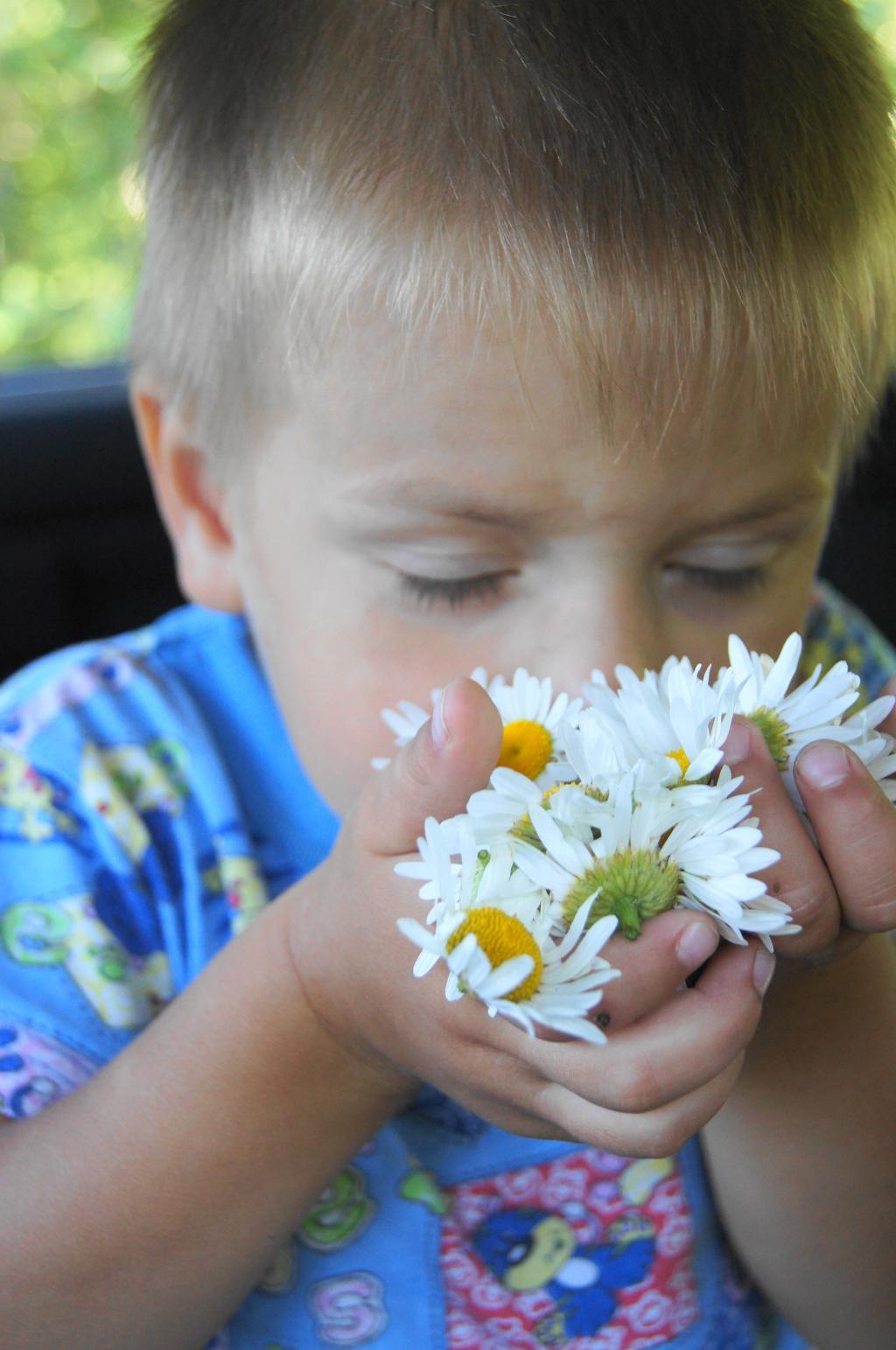 Как вкусно пахнут ромашки!. Цветочное настроение