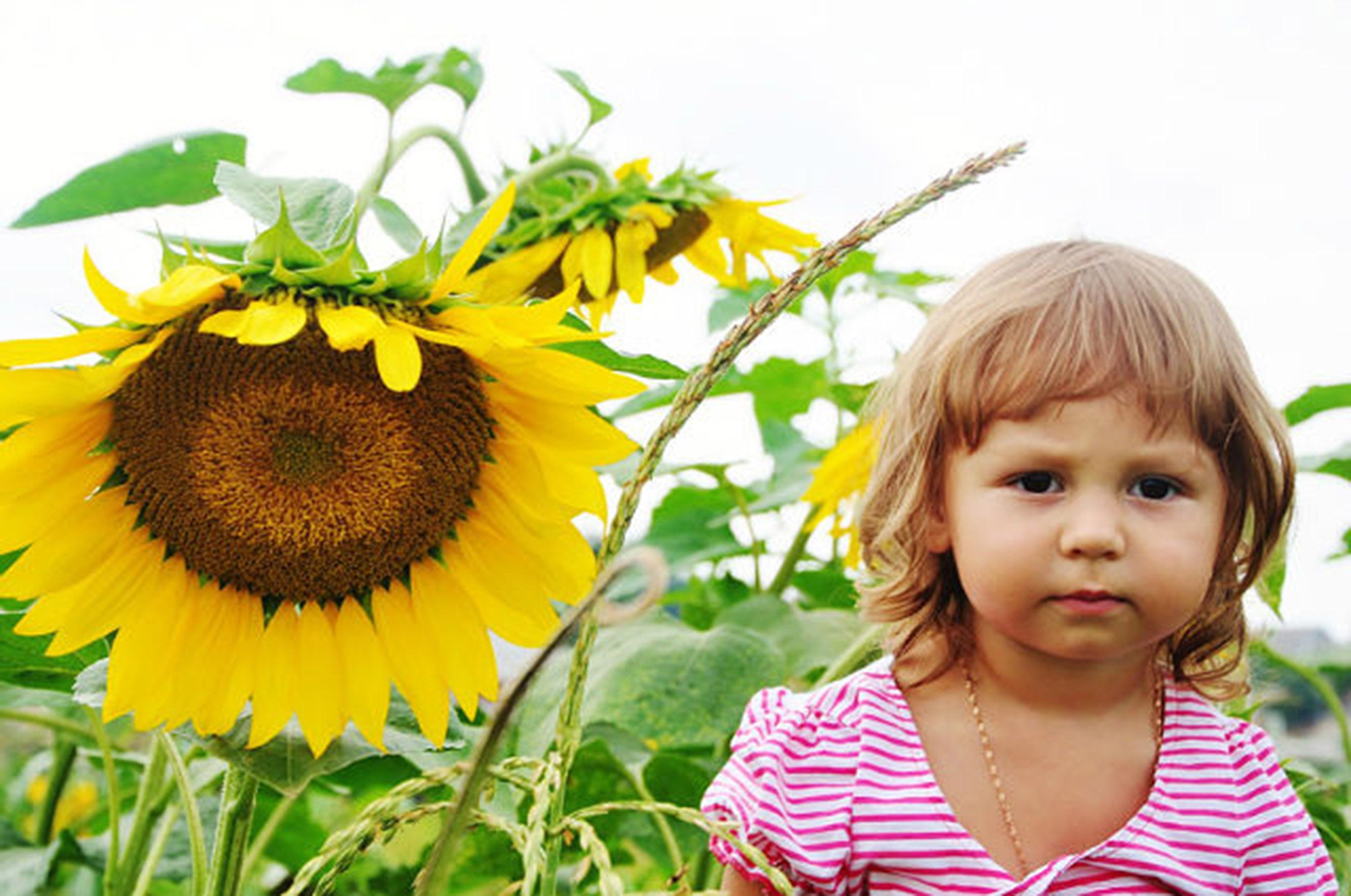 Солнышко-Подсолнышко. Цветочное настроение