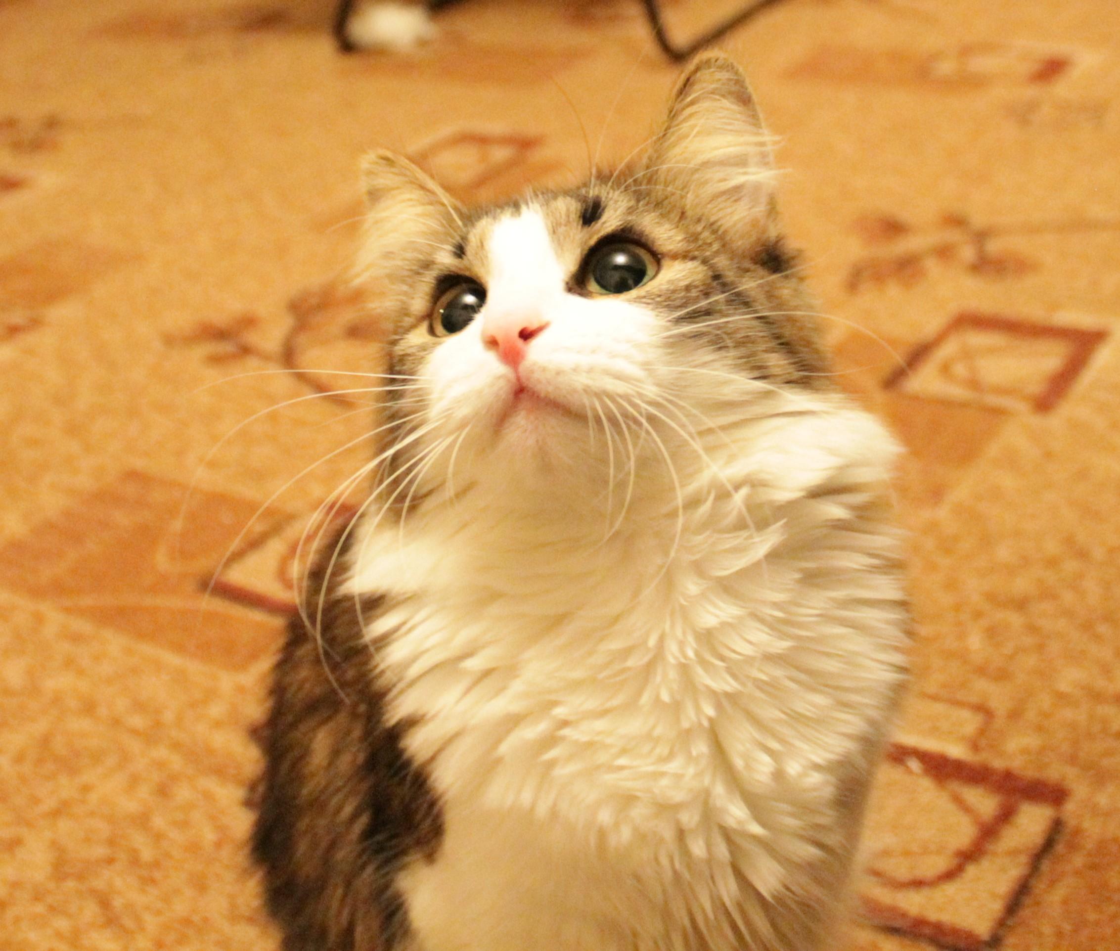 Котичка.