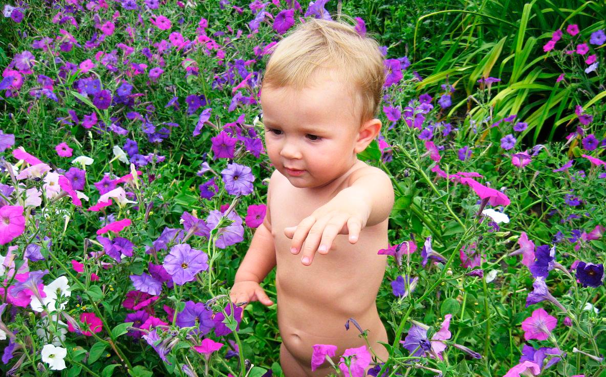 Максимка в поле Петуний. Цветочное настроение