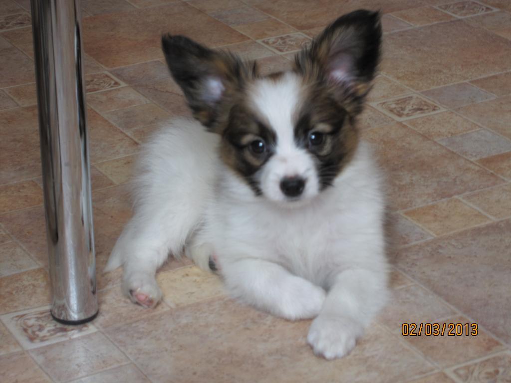 Наш Вилли. Моя маленькая собака
