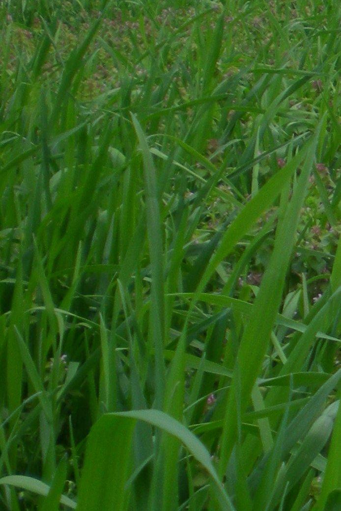 Травка зеленеет.... Блиц: весна идет!