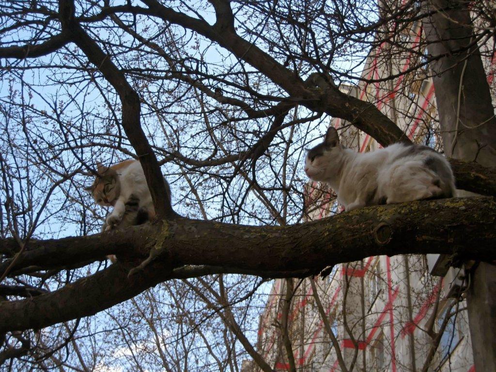 У кошек всегда мартовский период, даже в апреле!. Блиц: весна идет!