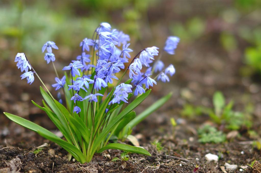 Первоцветы. Блиц: весна идет!