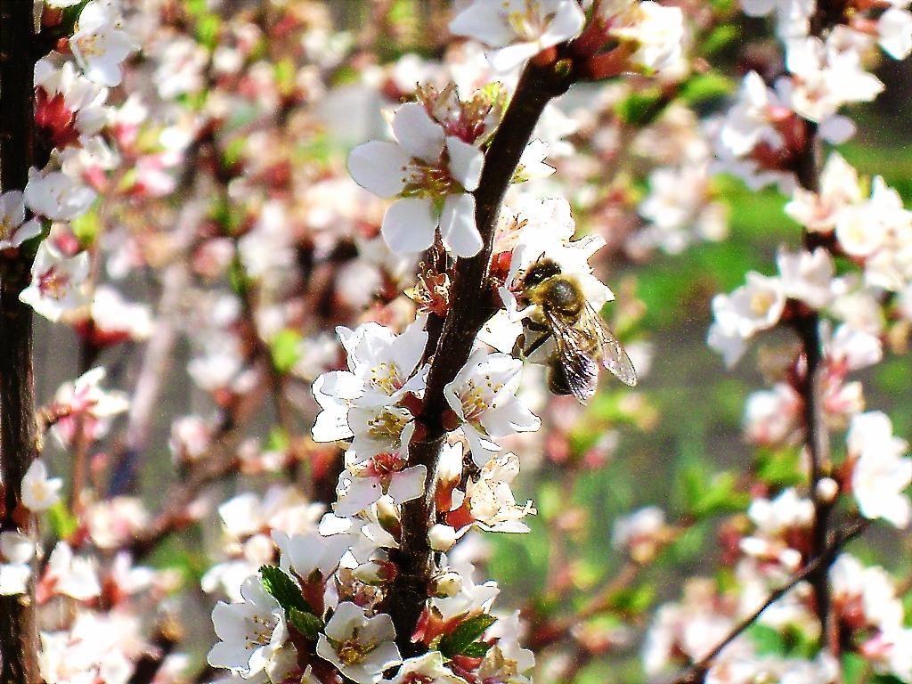 Весна. Блиц: весна идет!