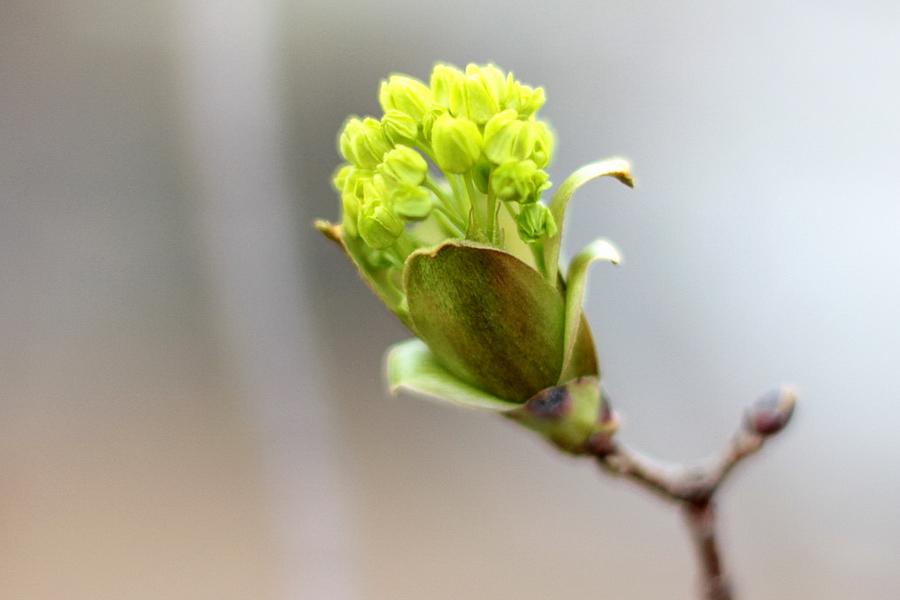 Весенняя нежность. Блиц: весна идет!