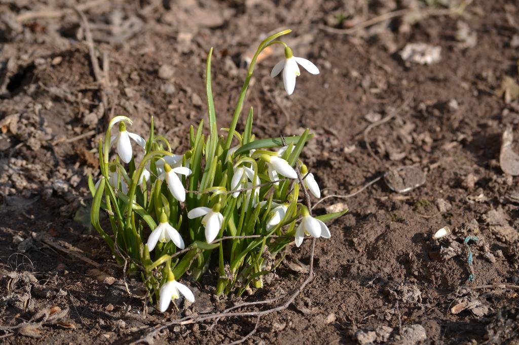 Весенняя радость. Блиц: весна идет!