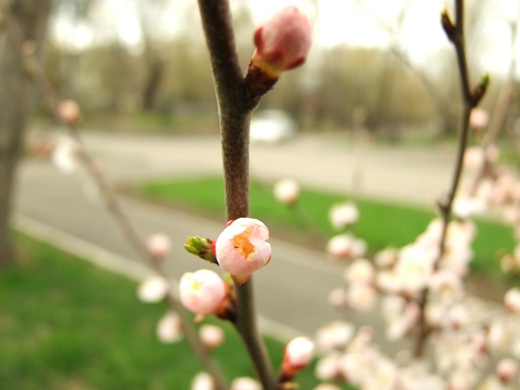 Весна пришла. Блиц: весна идет!