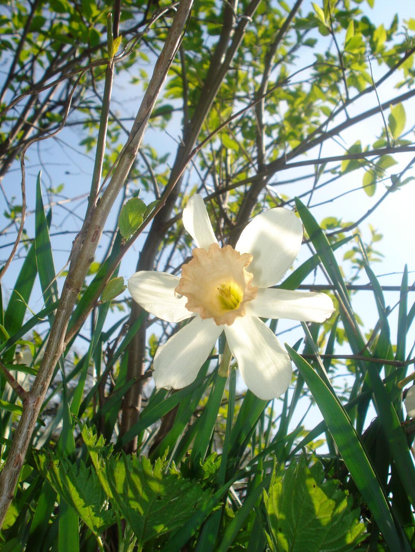 Нарцисик. Блиц: весна идет!