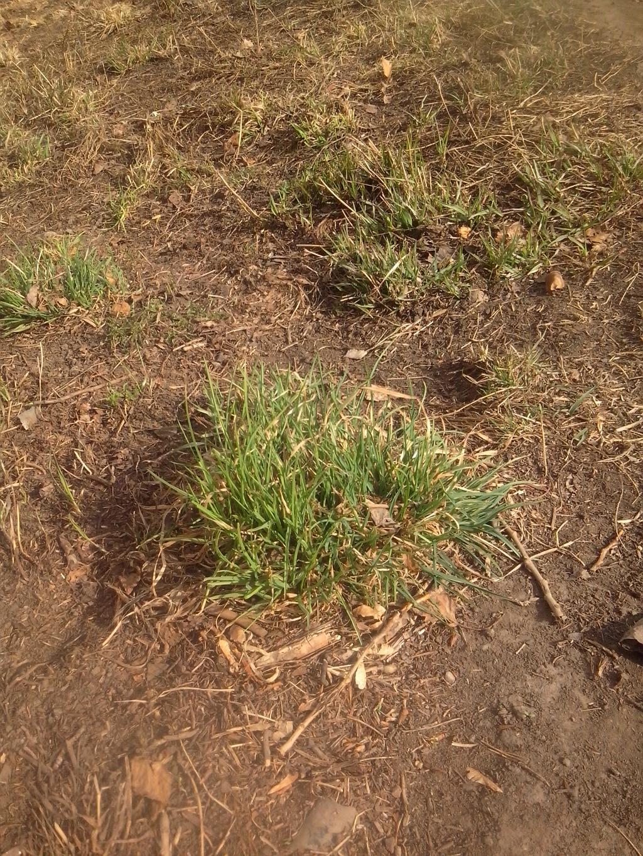 Зеленая травка. Блиц: весна идет!