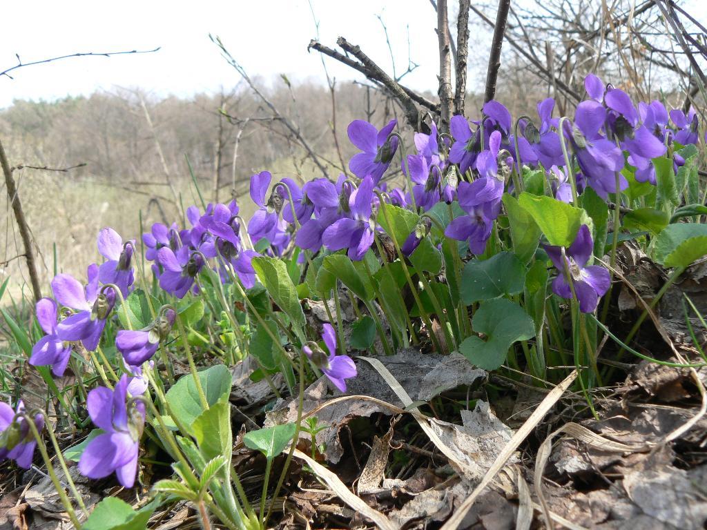 ВЕСЕННИЕ ЦВЕТЫ. Блиц: весна идет!