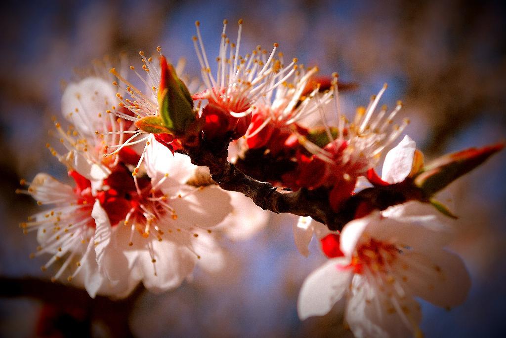 весна идет!. Блиц: весна идет!