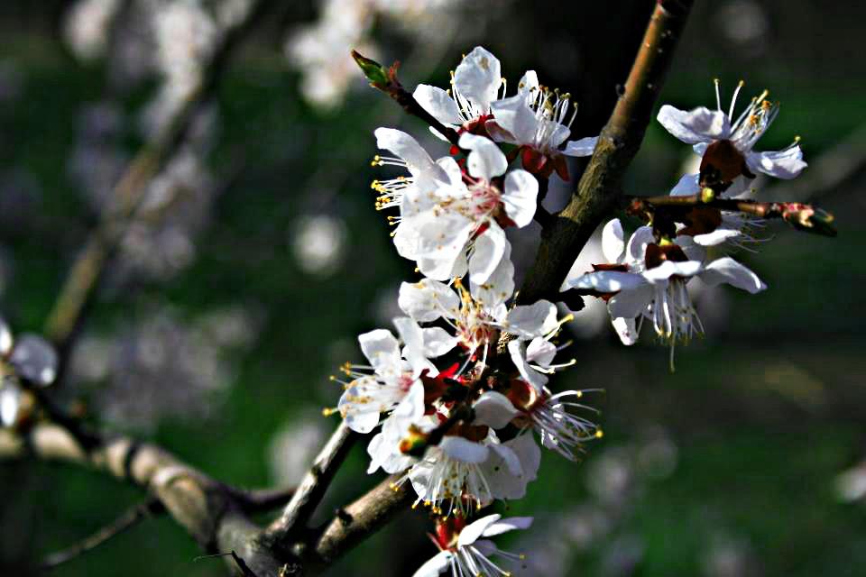 Весенняя веточка под солнцем.. Блиц: весна идет!