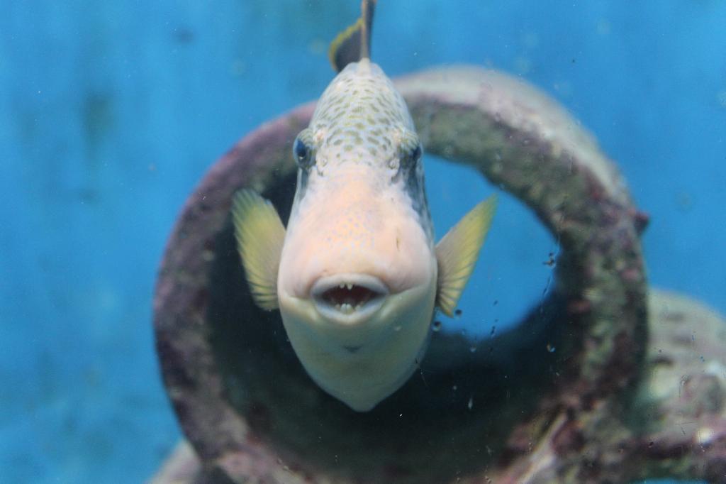 интересная рыба в аквариуме Пхукета. Блиц: синее и голубое