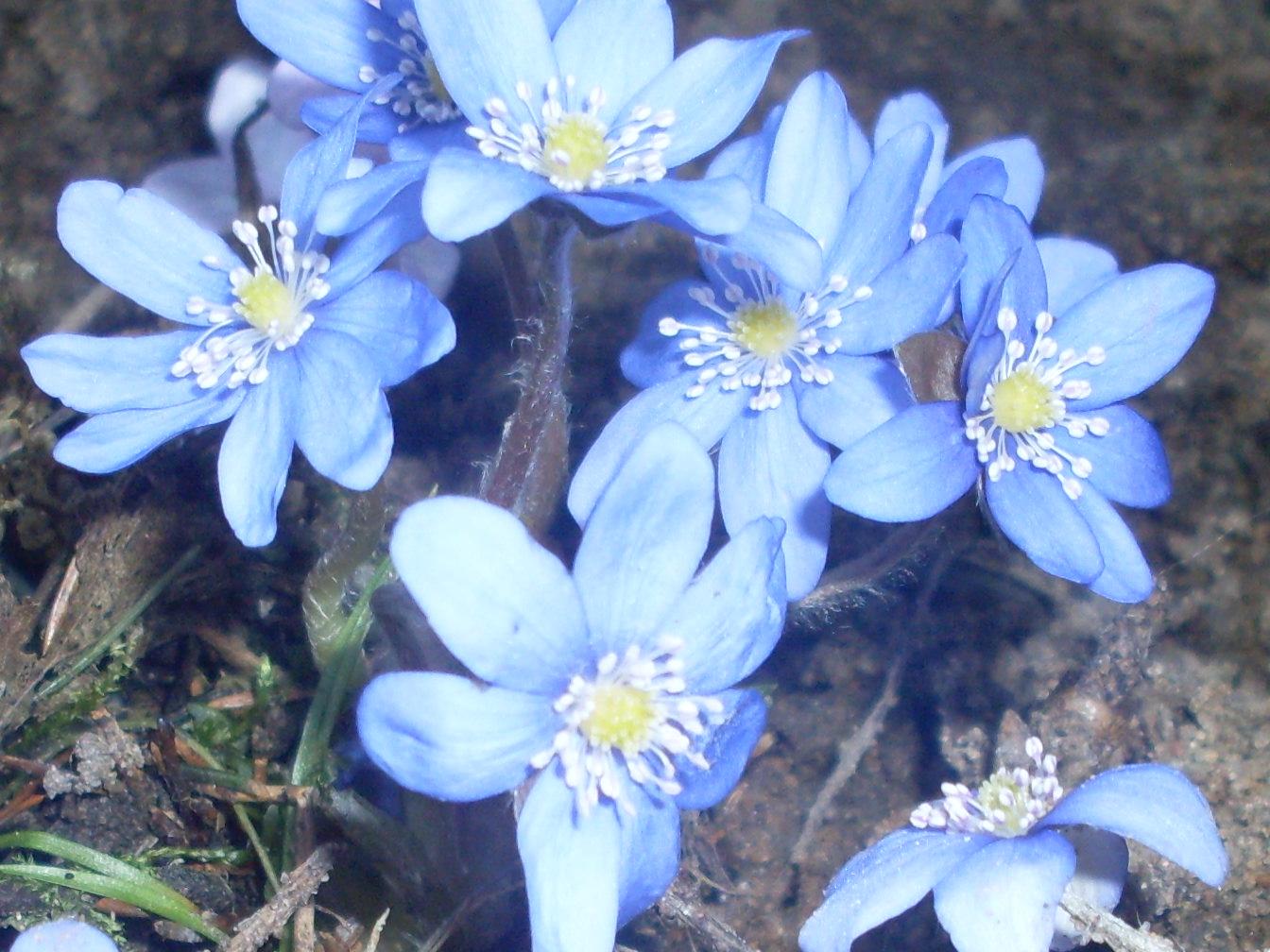 весна.... Блиц: синее и голубое