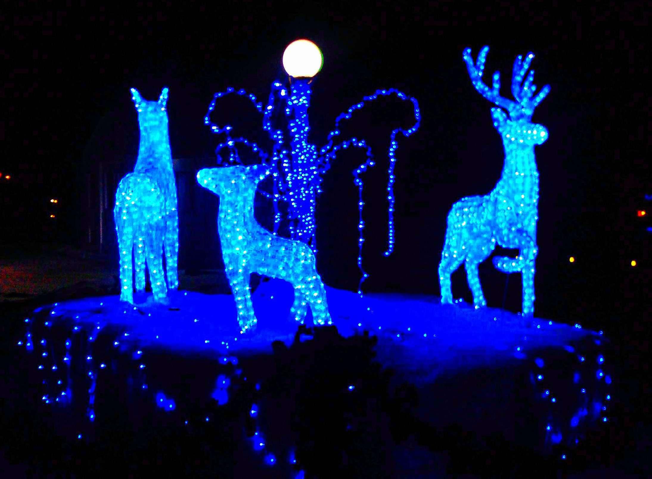 Семейство оленей.. Блиц: синее и голубое