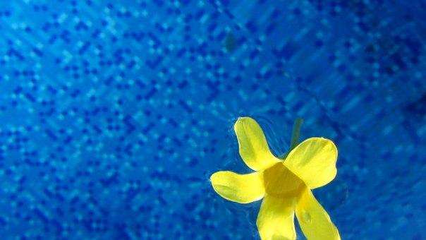 Контраст цветов.. Блиц: синее и голубое