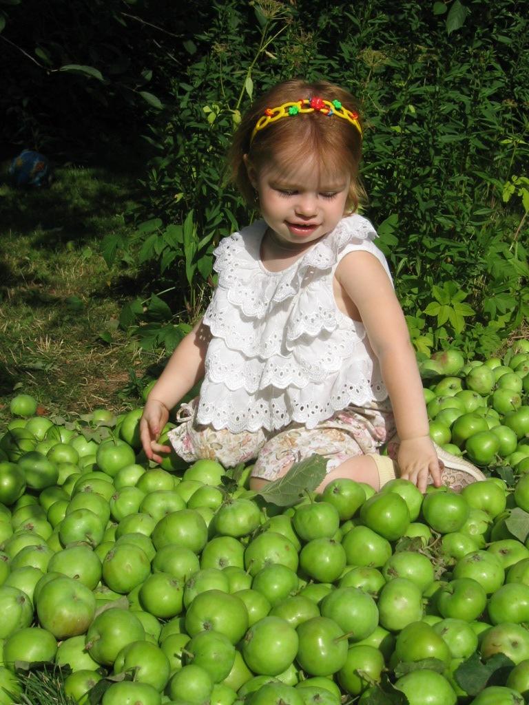 Яблочное счастье. Дары лета
