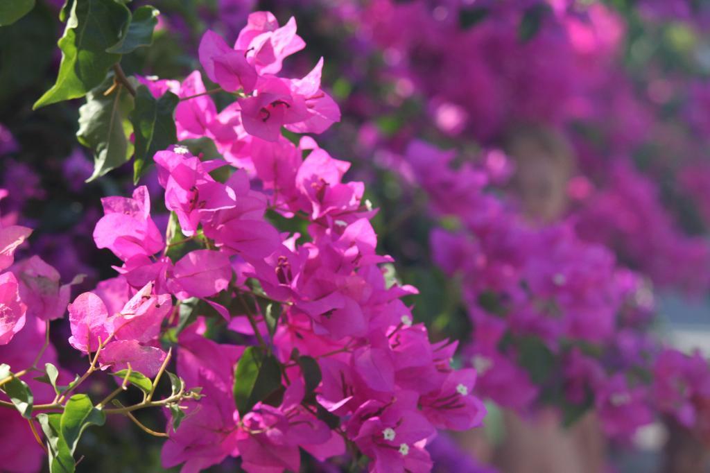 Цветочная фантазия.... Блиц: розовое