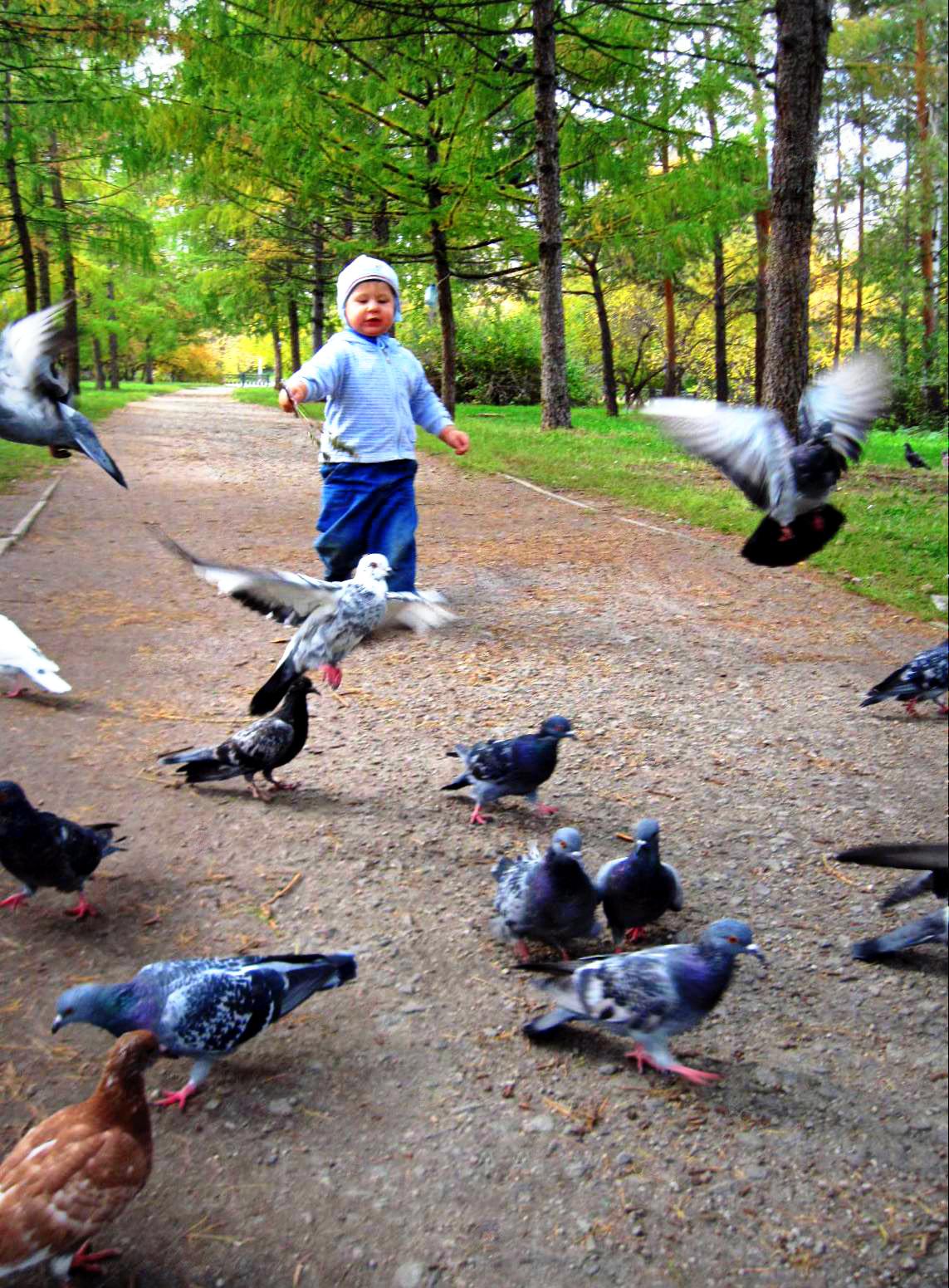 Погоняем голубей. Побегаем-попрыгаем