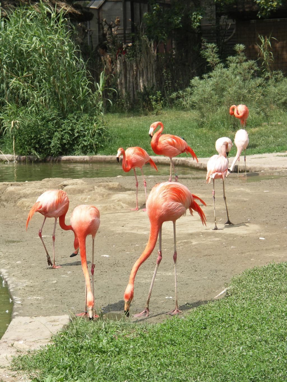 Фламинго. Блиц: розовое
