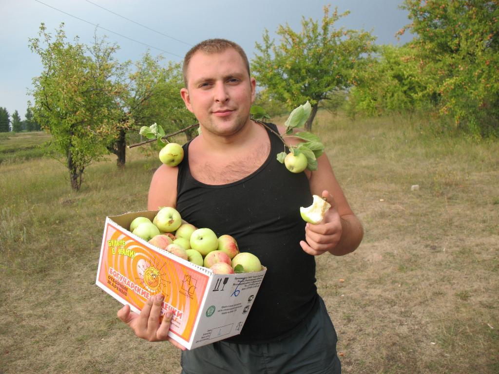 Вот такие яблочки уродились!. Дары лета