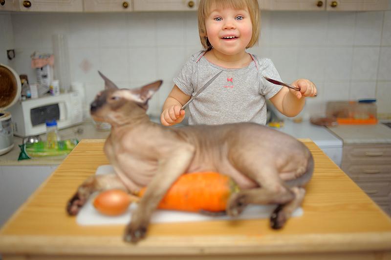 Не любите лысых кошек?. Братья наши меньшие