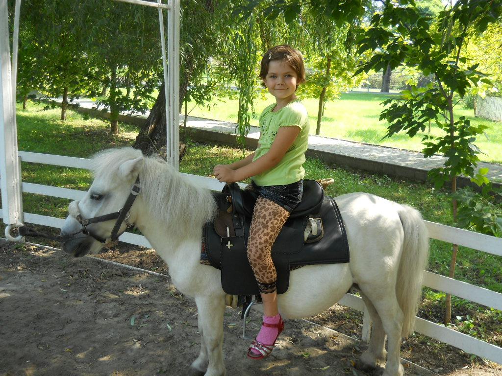 любимые пони. Братья наши меньшие