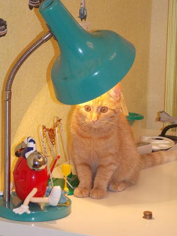 Вот такая наша кошечка! . Лучше кошки зверя нет!