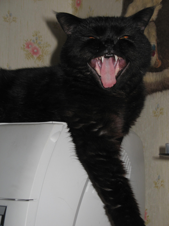 ЧАО!!!!. Лучше кошки зверя нет!